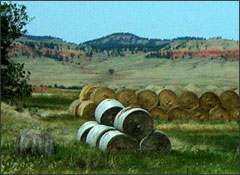 Wyoming stacked hay rolls